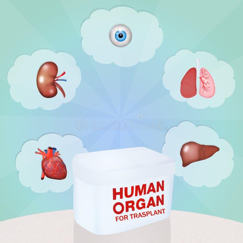 Organo umano per trasplant illustrazione vettoriale