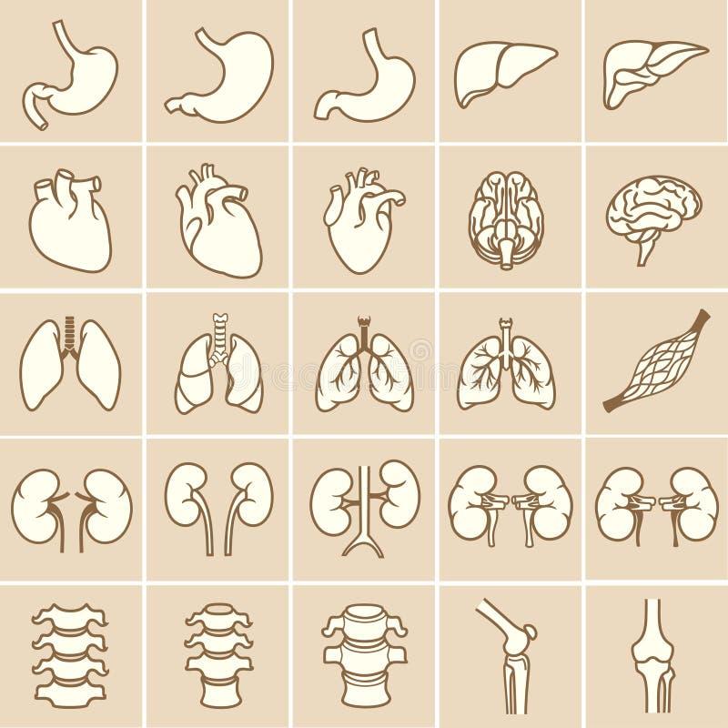 Organs_yellow libre illustration