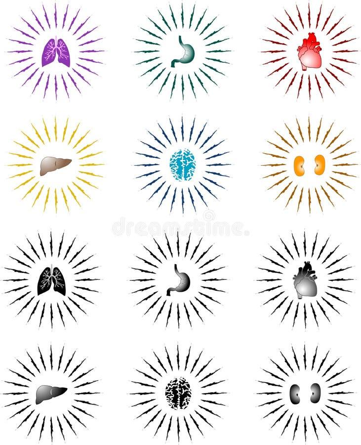 organsunburst vektor illustrationer
