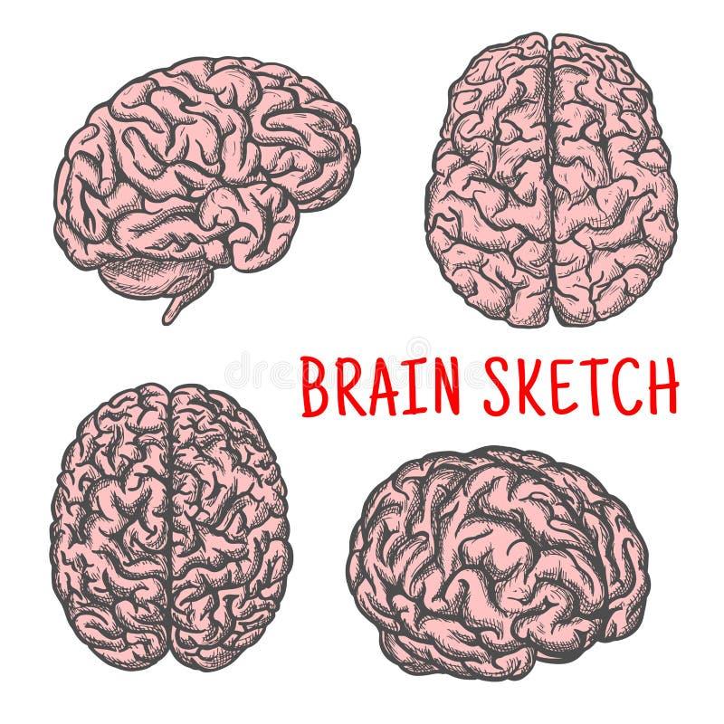 Organvektor-Skizzenikone des menschlichen Gehirns lizenzfreie abbildung