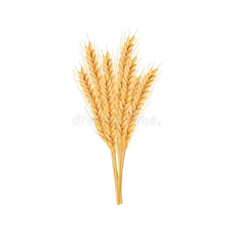 Orge, ensemble d'avoine Usine, épillet avec des oreilles, grains, graines, gerbe illustration libre de droits