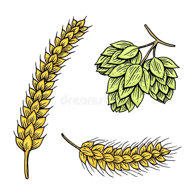 Orge et blé, malt et houblon Bière de oktoberfest gravée en encre tirée par la main dans le vieux style de croquis et de vintage  illustration stock