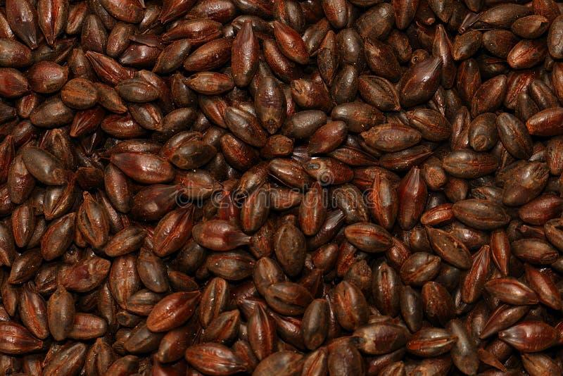 Orge maltée de chocolat photos stock