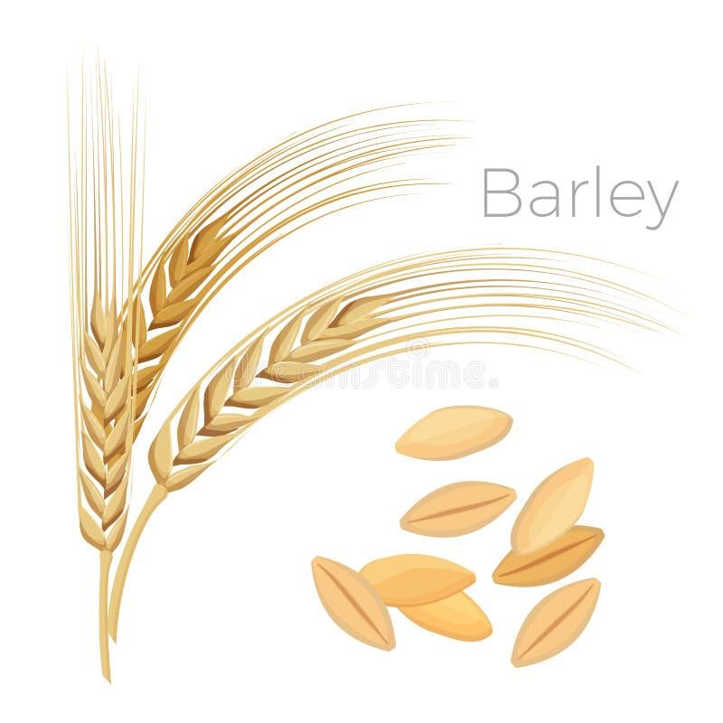 Orge, oreilles de blé Céréales avec des grains d'isolement sur le blanc illustration de vecteur