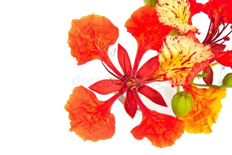 Orgulho do close up de Barbados imagem de stock