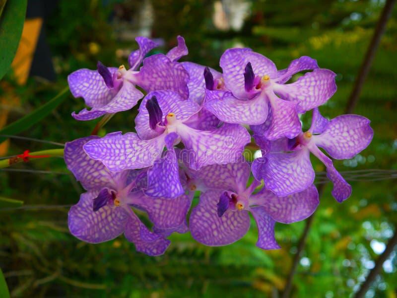 Orhid immagine stock libera da diritti
