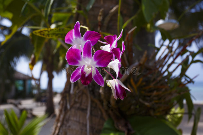 Orhid blommar på tropisk backgraund, palmträd royaltyfri fotografi