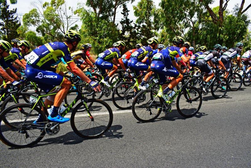 Orica Scott In The Peleton La Vuelta España royaltyfri foto