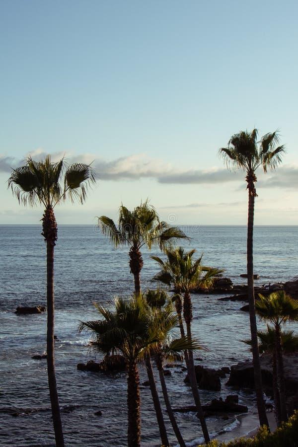Orientação do retrato de um por do sol com as palmeiras no Laguna Beach Califórnia Hora dourada durante o por do sol fotos de stock royalty free