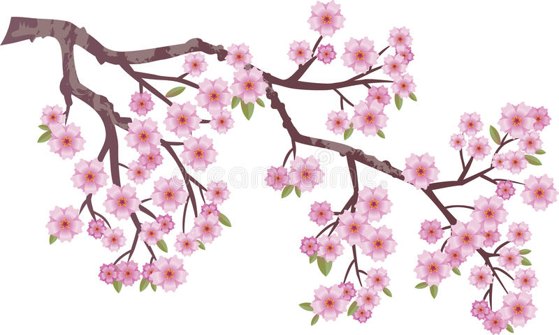 Oriental cherry royalty free illustration