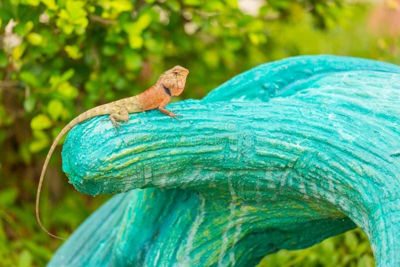 Oriental Garden Lizard stock photos