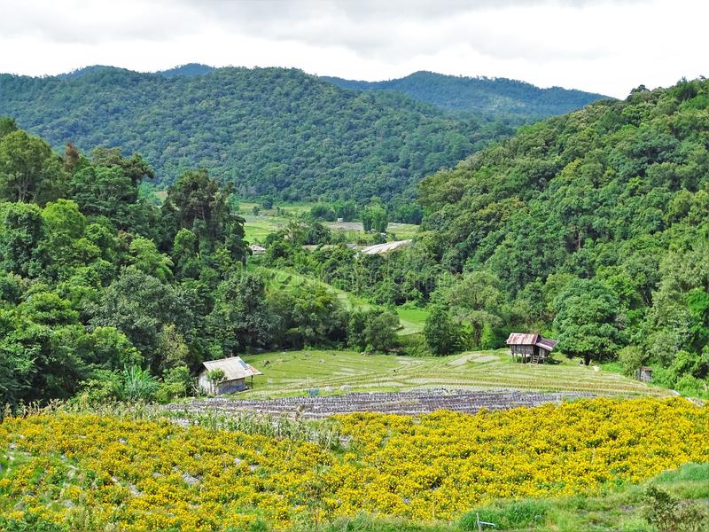 Oriental landscape of Chiang Mai jungle from Thailand. Valley between green mountains with yellow flowers and wooden huts royalty free stock photography