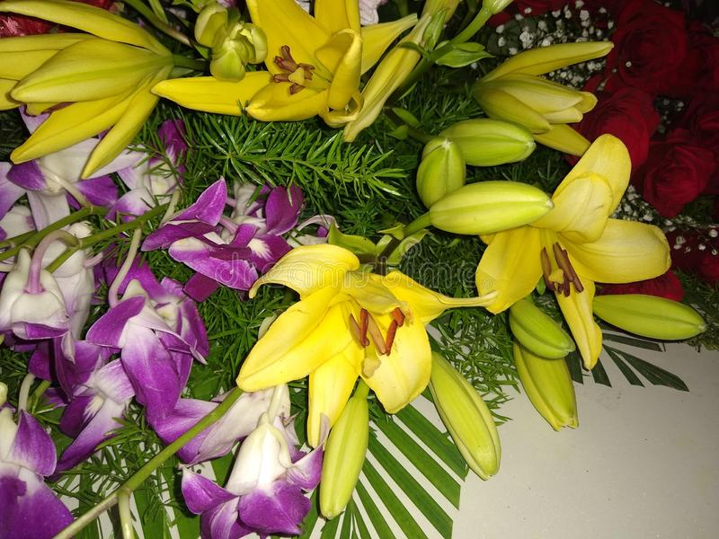 Oriental lily stock photos
