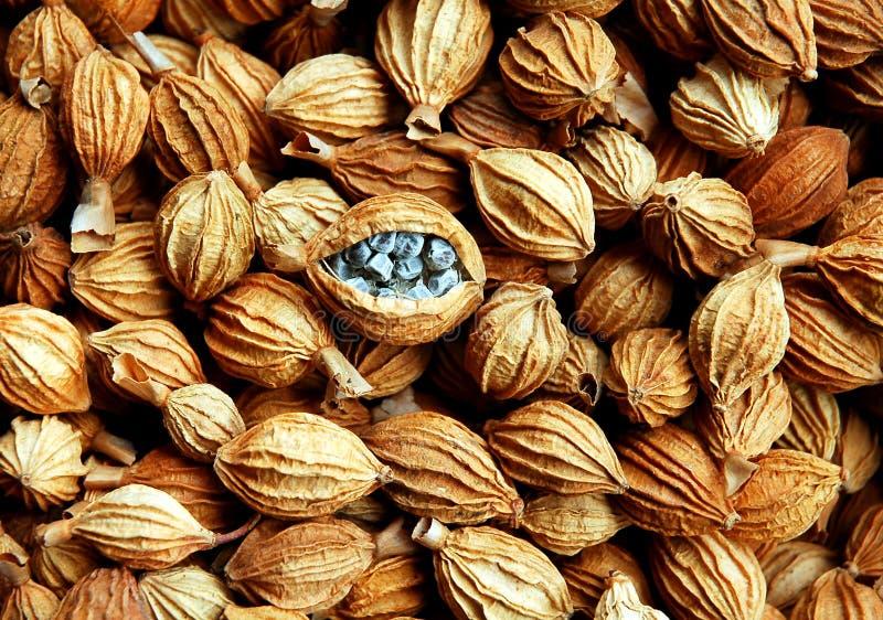 Download Oriental Medicine Herbs Royalty Free Stock Photo - Image: 2085005