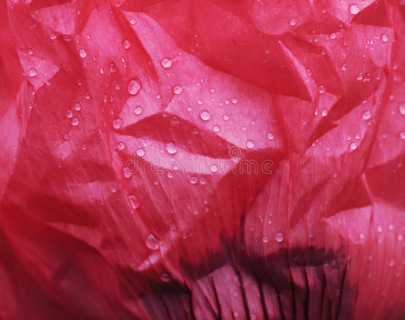 Download Oriental Poppy Flower Petal With Rain Drops Stock Image - Image: 14775301