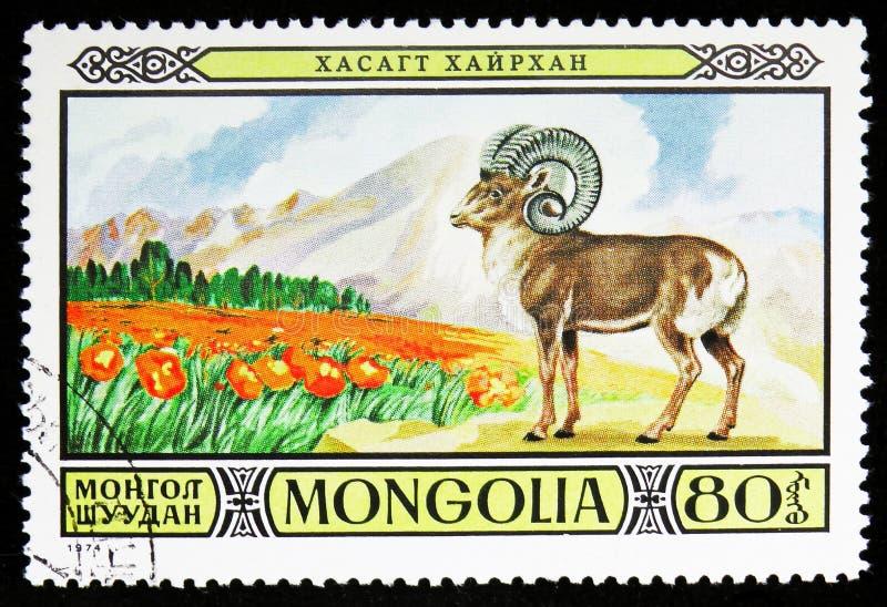 Orientalis do Ovis de Mouflon, fauna protegida no serie Mongolian das reservas dos animais selvagens, cerca de 1974 fotos de stock