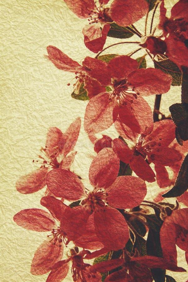 Orientaliska grungy blom- bakgrunder arkivfoto