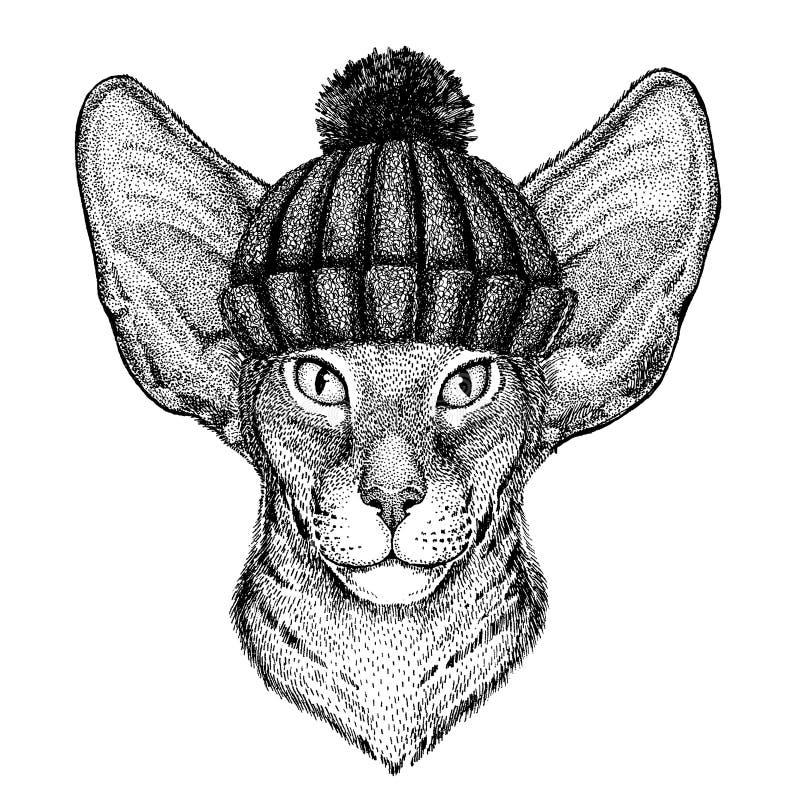 Orientalnego kota Chłodno zwierzę jest ubranym trykotowego zima kapelusz Ciepła pióropuszu beanie bożych narodzeń nakrętka dla ta royalty ilustracja