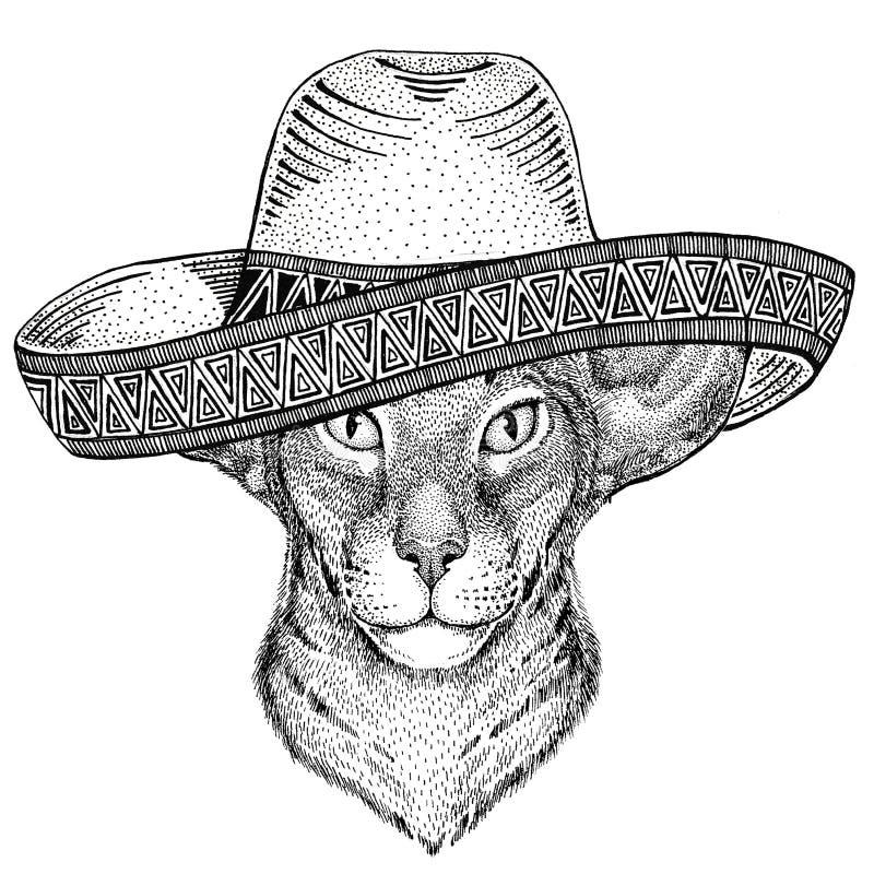 Orientalny kot z dużym ucho dzikim zwierzęciem jest ubranym sombrero Meksyk fiesta meksykanina przyjęcia ilustracyjnego Dzikiego  fotografia royalty free