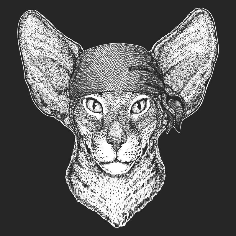 Orientalny kot z dużymi ucho Cool pirata, żeglarz, seawolf, żeglarz, rowerzysty zwierzę dla tatuażu, koszulka, emblemat, odznaka, royalty ilustracja