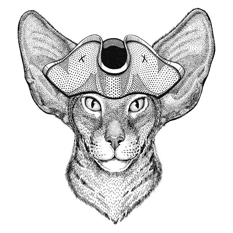 Orientalny kot z dużymi ucho jest ubranym pirata kapelusz Zadzierał kapelusz, tricorn żeglarza, żeglarza, żeglarza lub żeglarza, ilustracji