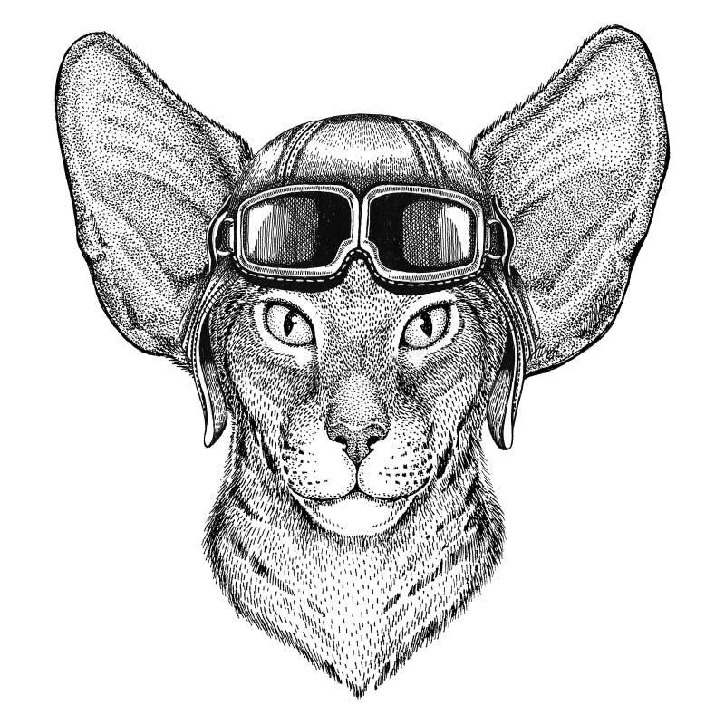 Orientalny kot z dużymi ucho jest ubranym rzemiennego hełma lotnika, rowerzysta, motocykl ręka rysująca ilustracja dla tatuażu, e ilustracji