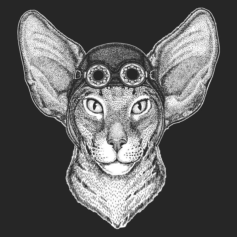 Orientalny kot z dużymi ucho Wręcza patroszonego wizerunek dla tatuażu, emblemat, odznaka, logo, łata Chłodno zwierzęcego jest ub royalty ilustracja