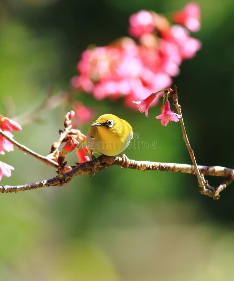 Orientalny oko i kwiat zdjęcie stock
