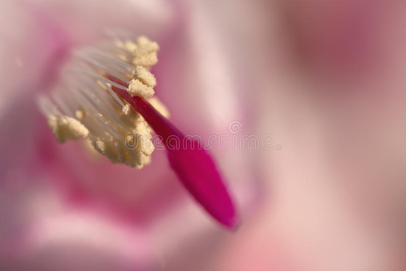 Orientation Sur Le Pollen Photo stock