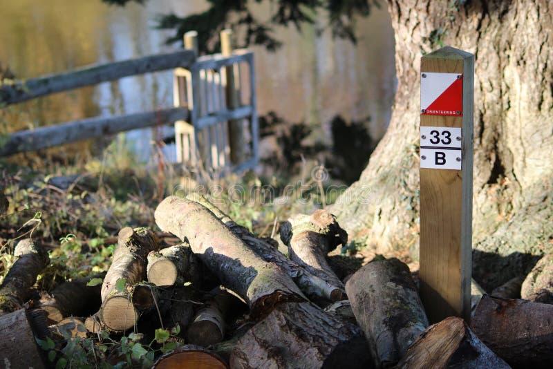 Orienteering岗位在森林里 免版税图库摄影