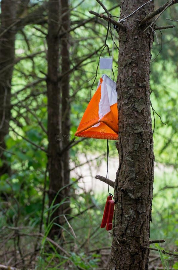 Orienteering旗子 库存照片