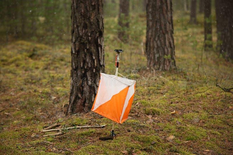 Orienteering标志在森林里 免版税库存照片