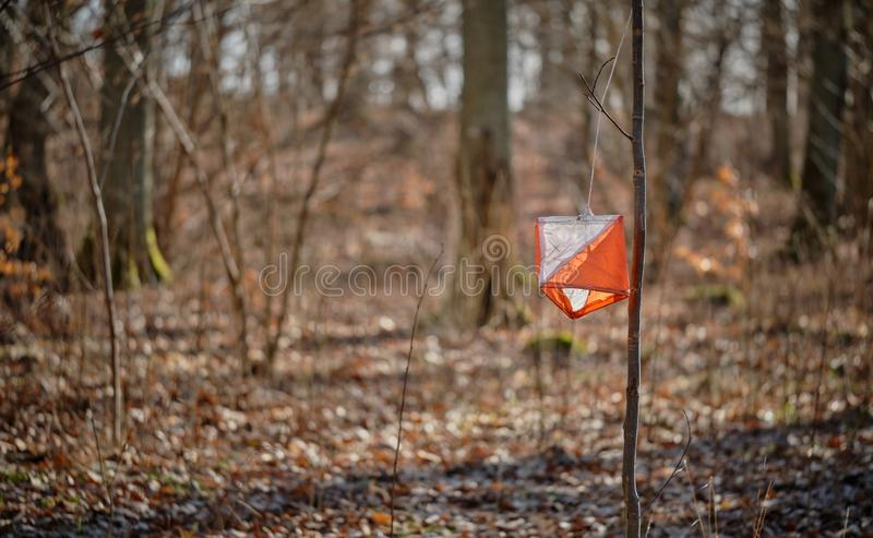 Orienteering marker on a small tree. In the forest stock images