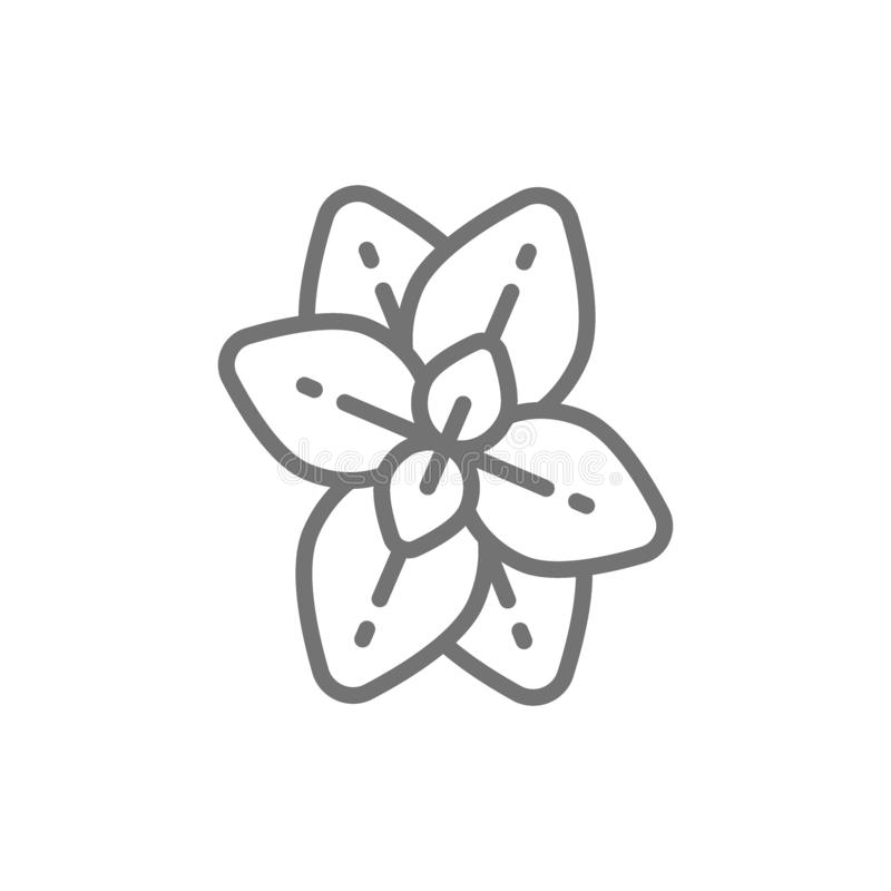 Origan, menthe, ligne icône de basilic illustration libre de droits