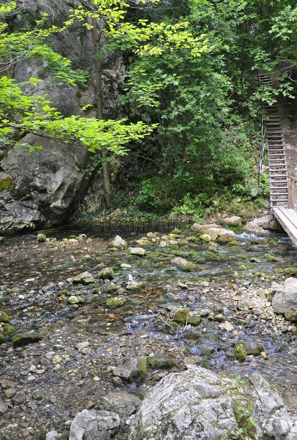 Origen de la cascada de Bigar de Caras-Severin en Rumania imágenes de archivo libres de regalías