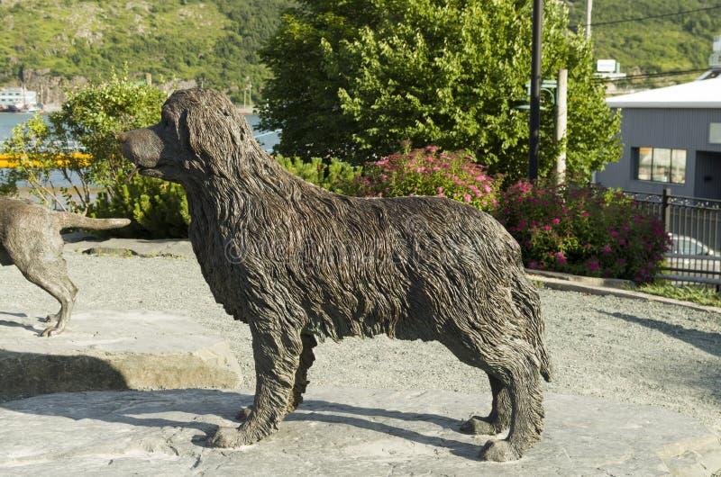 The Newfoundland Dog a huge dog 2 stock photos