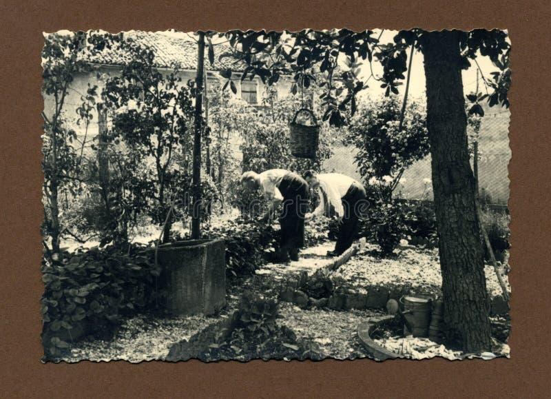Original 1950 antique photo-gardeners stock photography