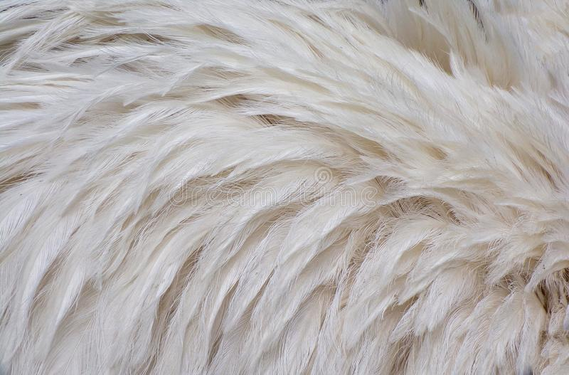 Original background of abstract white Flamingo feathers. stock images