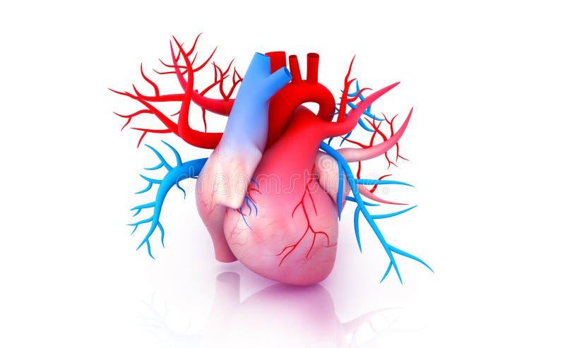 original för illustration för anatomihandhjärta målad mänsklig stock illustrationer