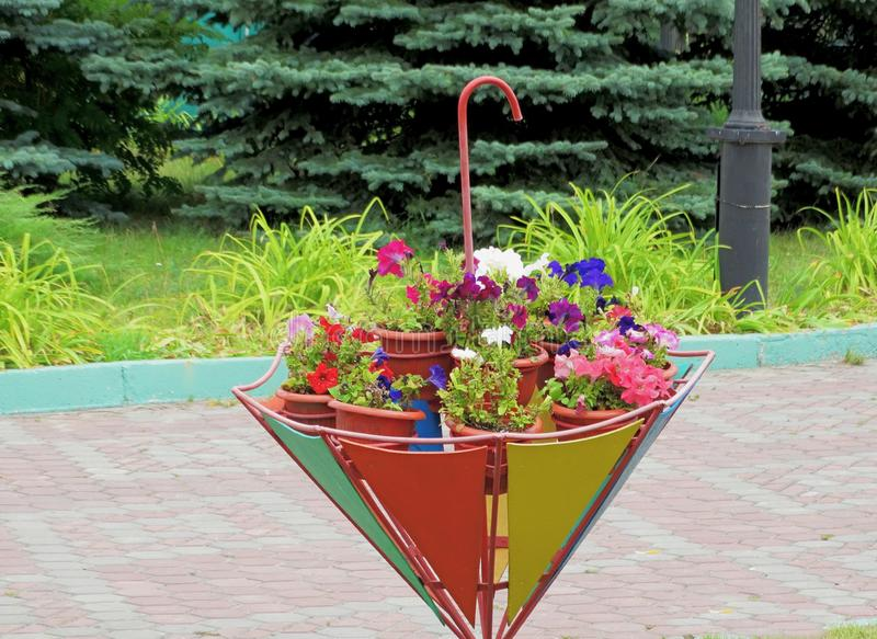 An original flowerbed in the form of an inverted umbrella in a recreation park. An unusual option for placing flowers stock image