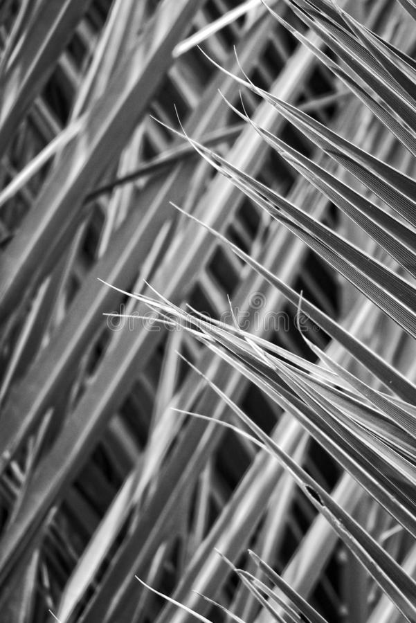 Original interesting abstract background with green palm leaf in close-up stock photos