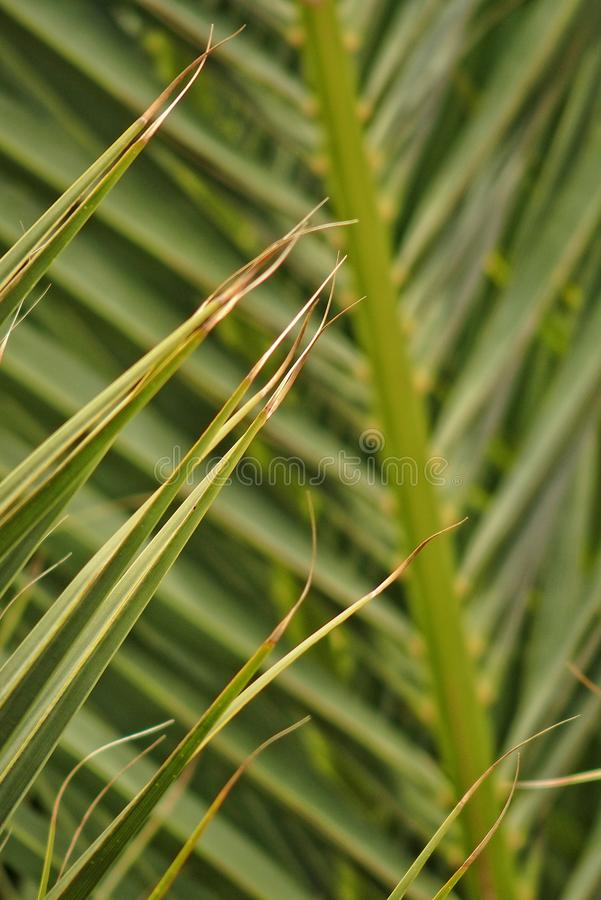 Original interesting abstract background with green palm leaf in close-up stock image
