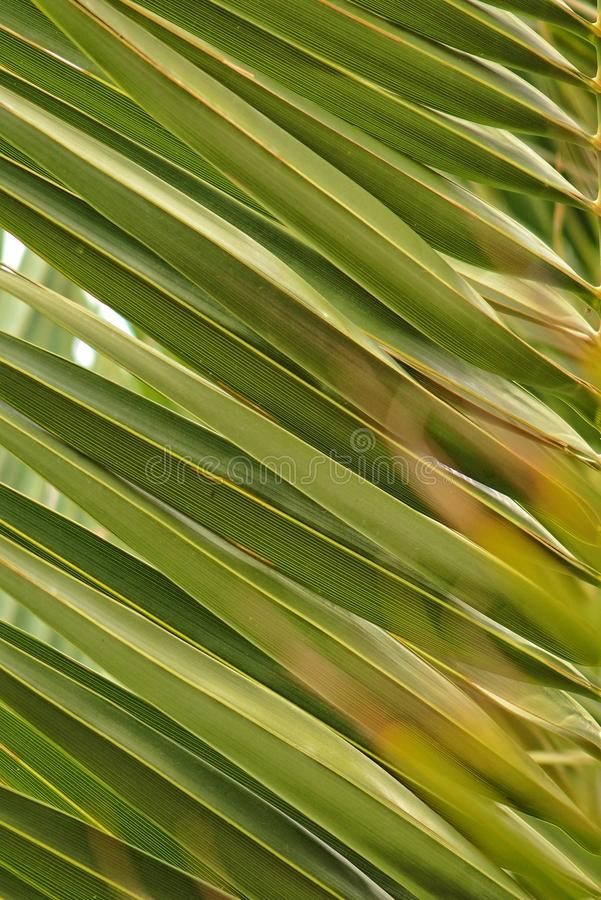 Original interesting abstract background with green palm leaf in close-up stock photo