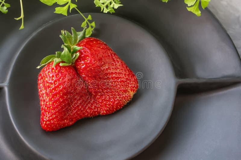 Original- ovanliga formlögner för stora mogna jordgubbar på en härlig svart matte platta på en grå bakgrund kopiera avst?nd royaltyfria bilder