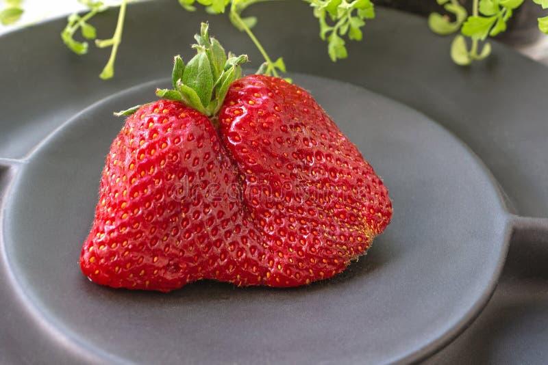 Original- ovanliga forml?gner f?r stora mogna jordgubbar p? en h?rlig svart matte platta p? en gr? bakgrund kopiera avst?nd arkivfoton