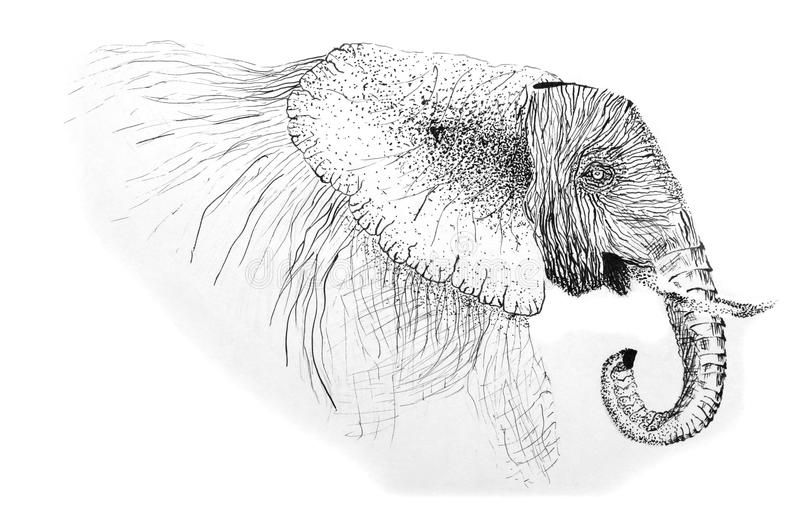 Original Pen Drawing of an African Elephant stock photos