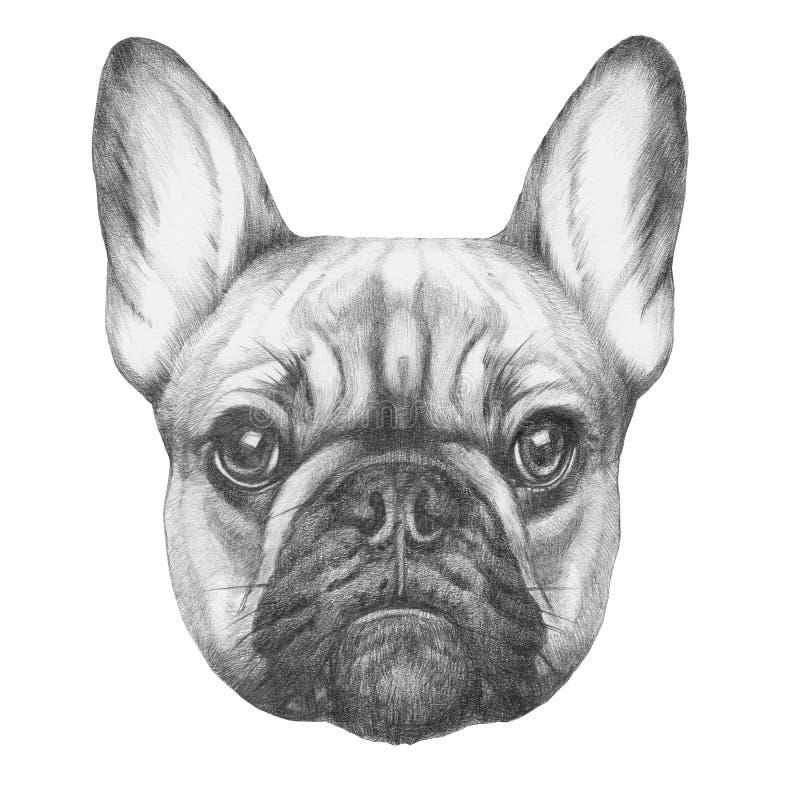 Original- teckning av den franska bulldoggen
