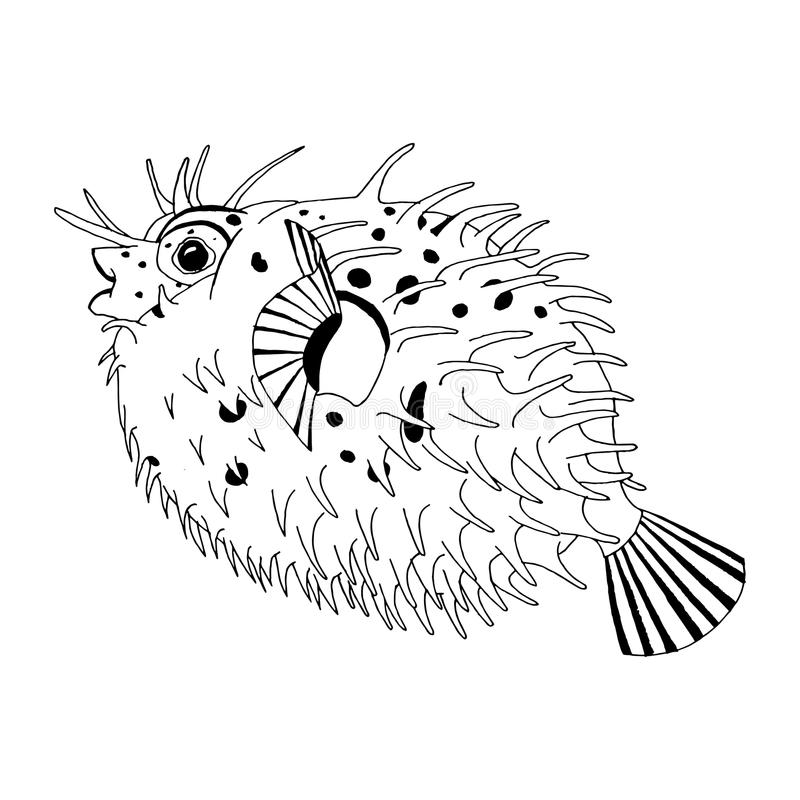 Original- teckning av inbindningsett piggsvinfisken royaltyfri illustrationer