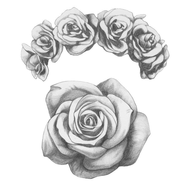 Original- teckning av rosor royaltyfri illustrationer