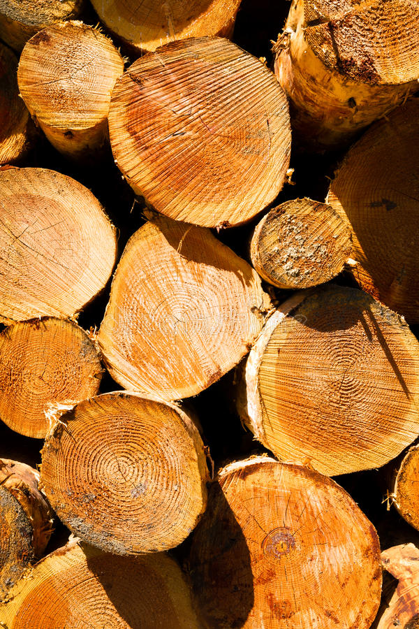 Tratamiento de la madera beautiful arriba y abajo dficit - Tratamiento de la madera ...
